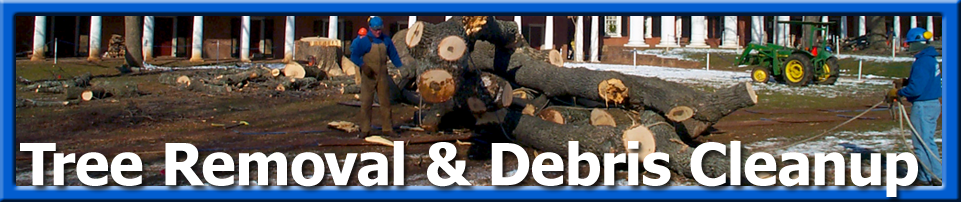 Tree Care - Tree removal debris cleanup